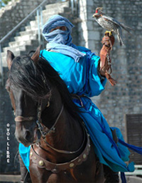 Provins - medieval city - show - falcons -
